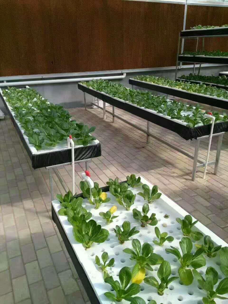 智能植物工厂设备