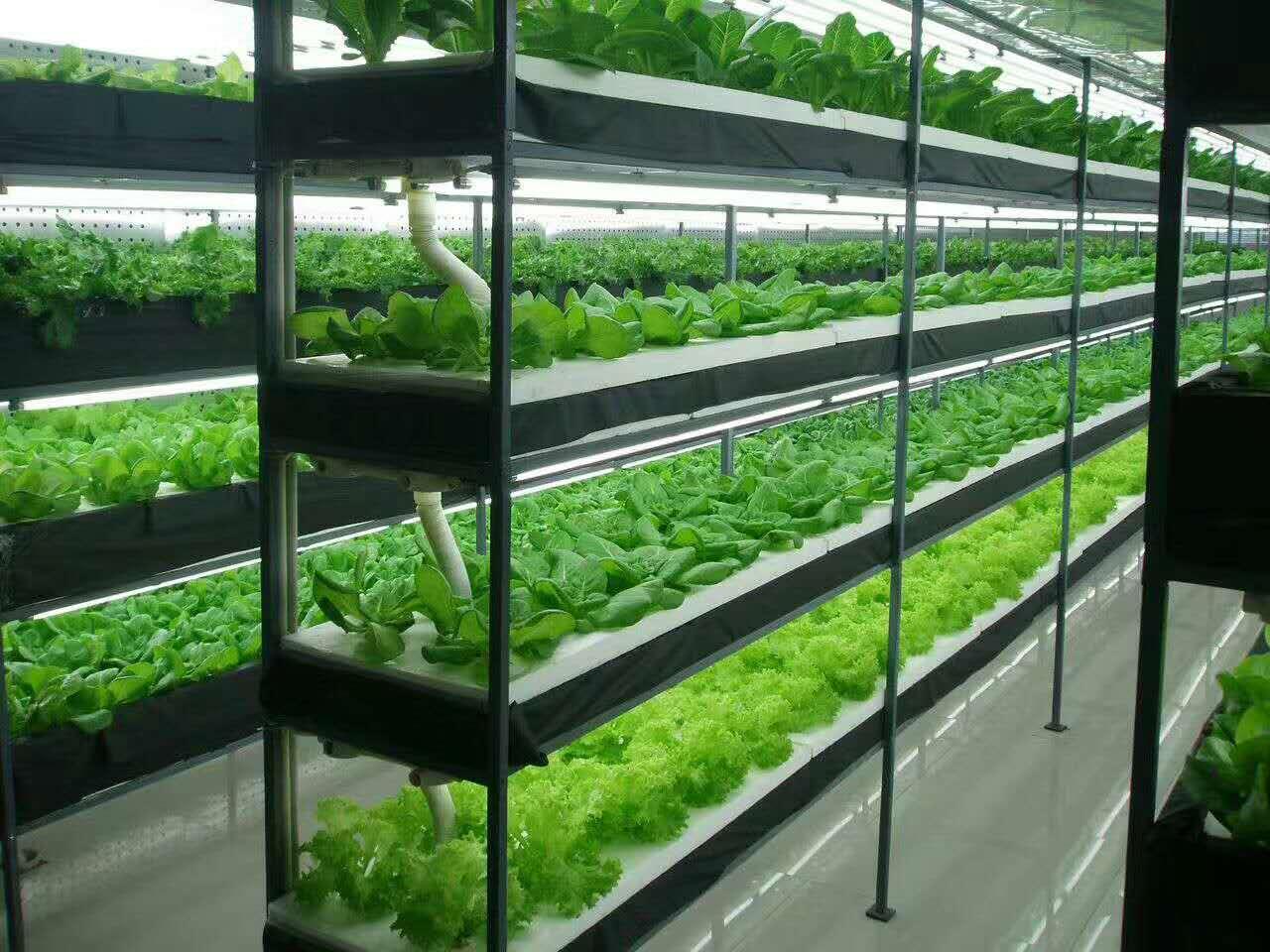 智能植物工厂